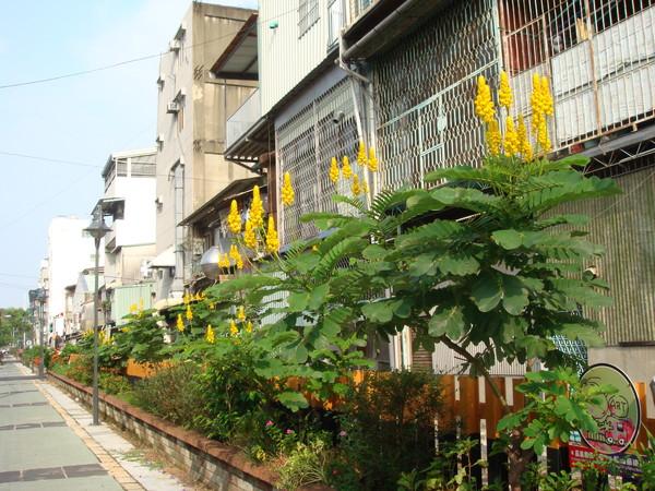阿里山鐵道旁的黃花