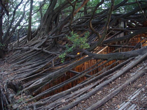 安平樹屋3