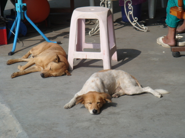 幸福曬太陽的狗狗