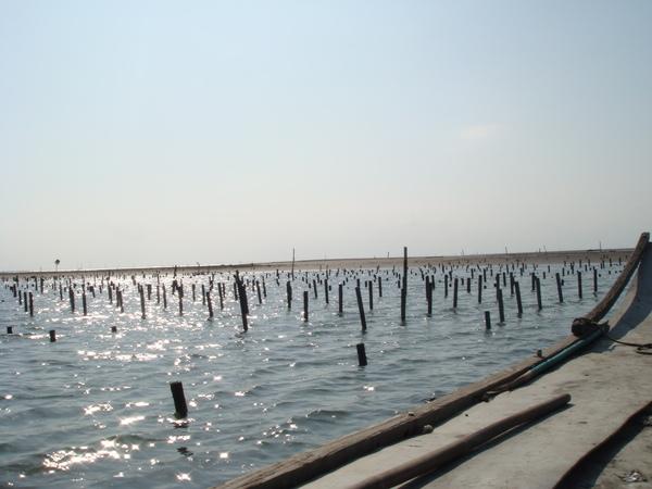 陽光下的蚵棚