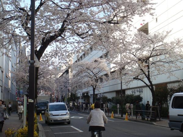 上野車站入谷口旁的櫻花也開了