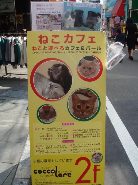 貓咪咖啡店