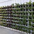2018花博 植物牆