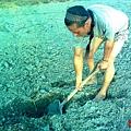 採集送檢土壤1
