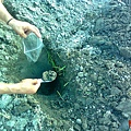 採集送檢土壤2
