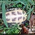 烏龜2.jpg