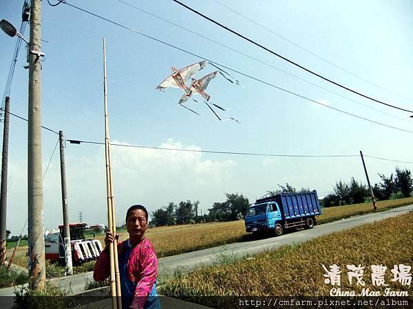 老鷹風箏2.JPG