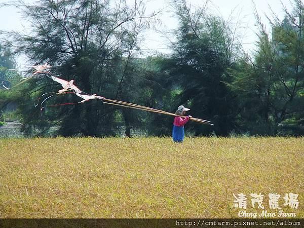 老鷹風箏4.JPG