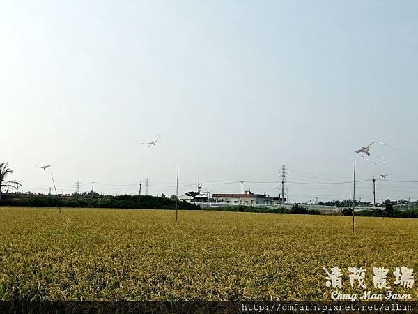 老鷹風箏5.JPG