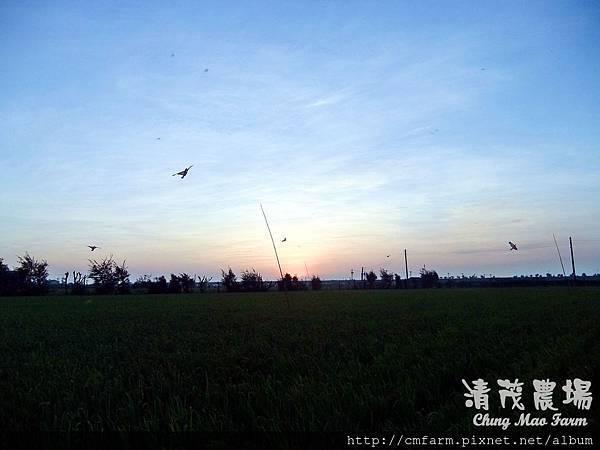 老鷹風箏6.JPG
