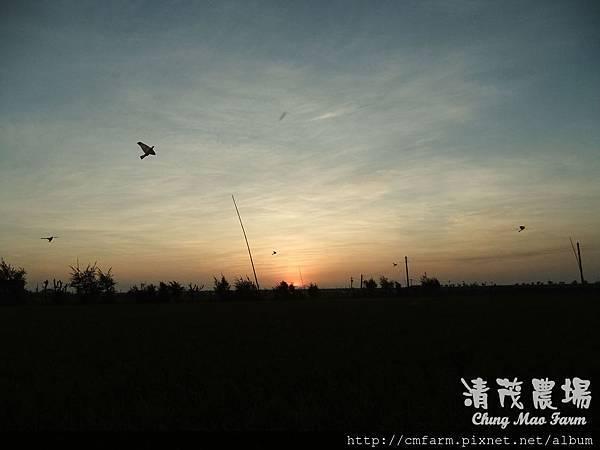 老鷹風箏7.JPG