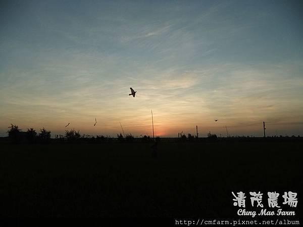 老鷹風箏8.JPG