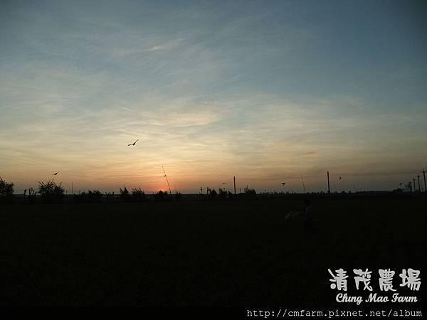 老鷹風箏9.JPG