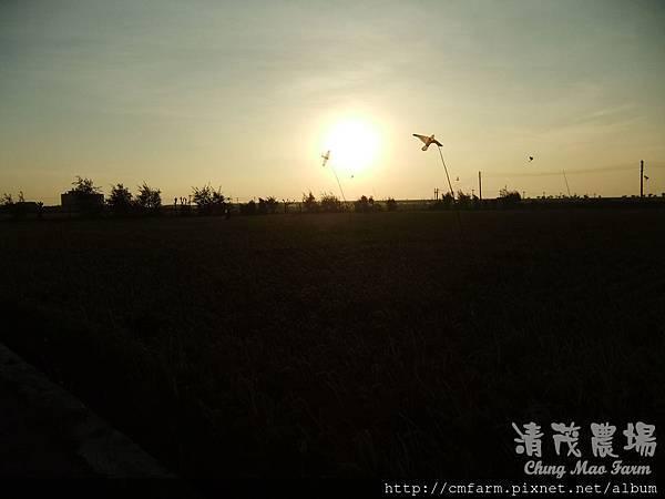 老鷹風箏10.JPG