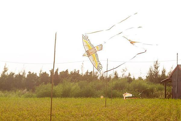 稻田裡的老鷹風箏.張良一(6).jpg