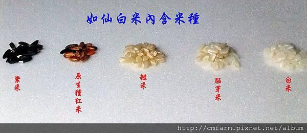 如仙米種.JPG