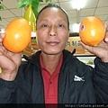 山東青島巨型柳橙 (1).JPG