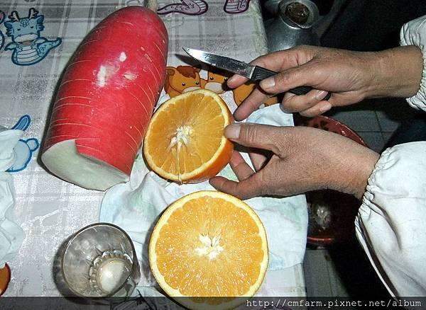 山東青島巨型柳橙 (5).JPG