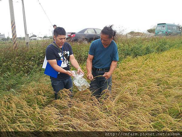 中央畜產會田間抽樣--103年第二期水稻1.jpg