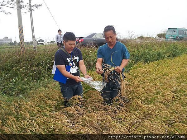 中央畜產會田間抽樣--103年第二期水稻2.jpg