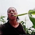 自然農法白龍王水果玉米筍01.jpg