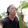 自然農法白龍王水果玉米筍02.jpg