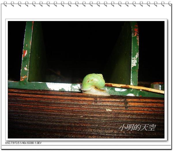 青山蝸牛.JPG