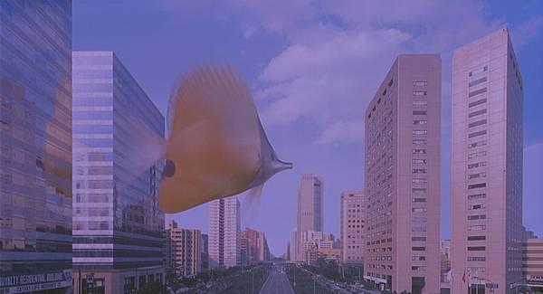 熱帶魚04.jpg