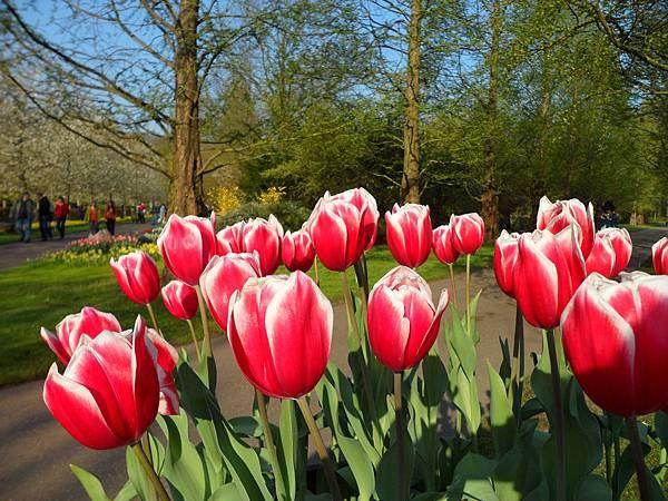 荷蘭阿姆斯特丹-庫肯霍夫花園13.JPG