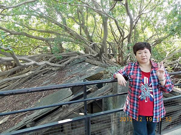 台南-安平樹屋10.JPG
