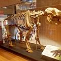 布里斯本-昆士蘭博物館 05.JPG