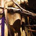 布里斯本-昆士蘭博物館 09.JPG