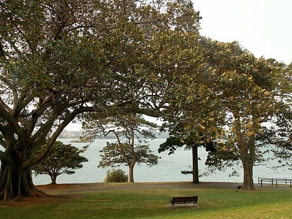 雪梨-皇家植物園 01.JPG