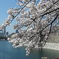 大阪-大阪城 西之丸庭園 06.JPG