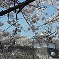 大阪-大阪城 西之丸庭園 07.JPG