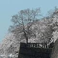 大阪-大阪城 西之丸庭園 09.JPG