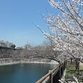 大阪-大阪城 西之丸庭園 10.JPG
