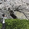 大阪-大阪城 西之丸庭園 12.JPG