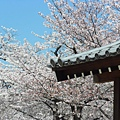 大阪-大阪城 西之丸庭園 13.JPG