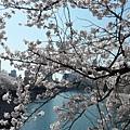 大阪-大阪城 西之丸庭園 16.JPG