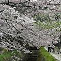 京都-哲學之道 05.JPG