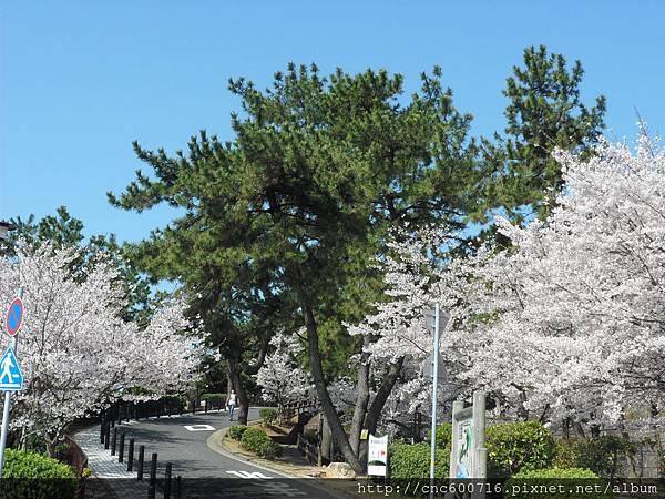 神戶-須磨浦公園 09.JPG