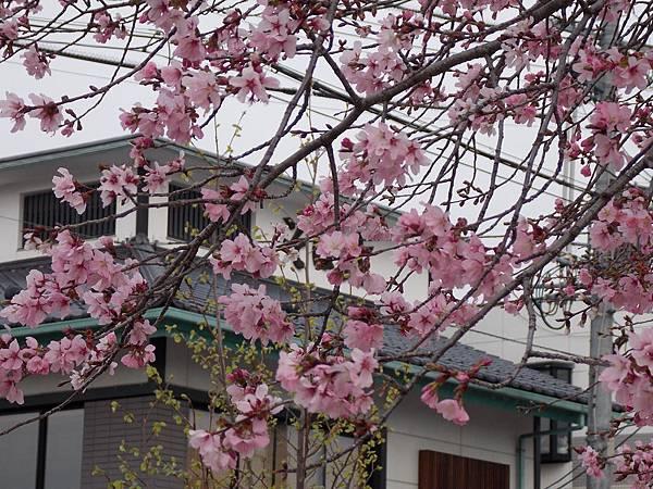 松本城 04.JPG