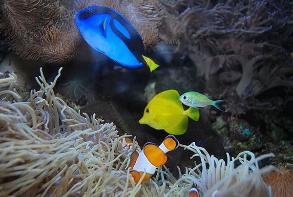 奧克蘭-凱利達頓水族館 15.jpg