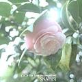 SNAP [5]
