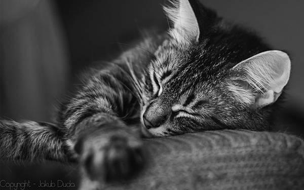 cats-animals-monochrome-wallpaper-1.jpg