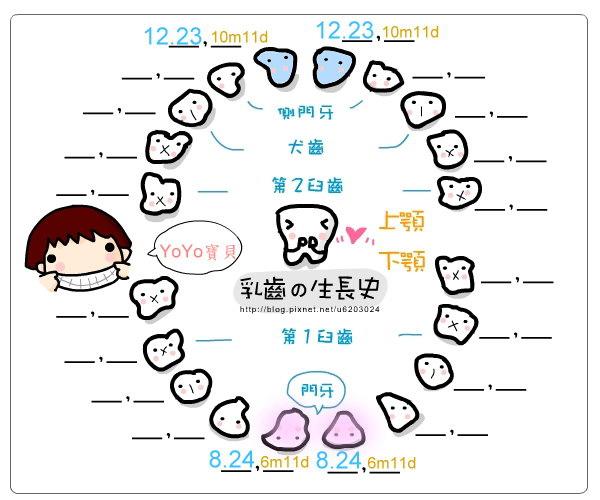 乳牙成長史1.jpg