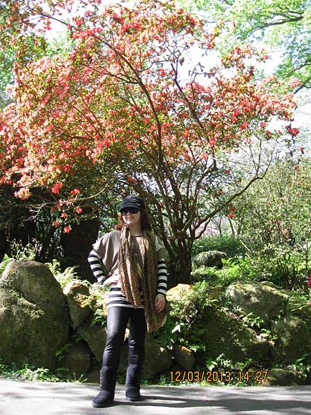 2013陽明山花季.JPG
