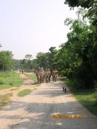 尼泊爾之旅-奇旺2 (19).JPG