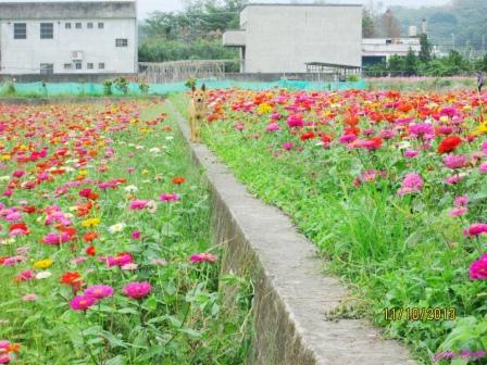 蘆竹花海 (23).jpg